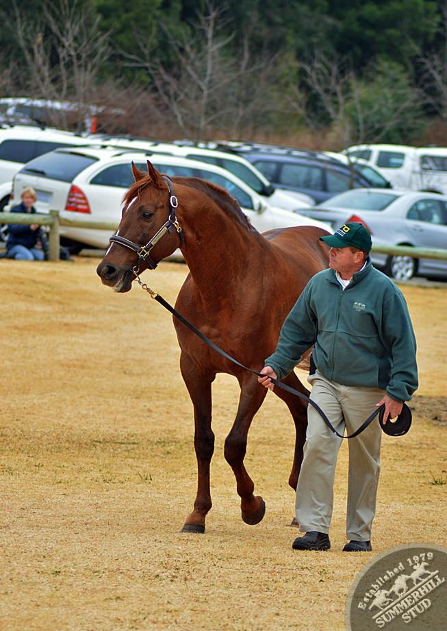 cathsseta-stallion-day-96a.jpg