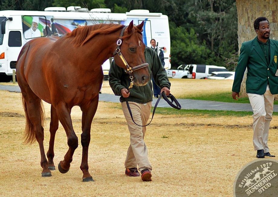 cathsseta-stallion-day-100.jpg