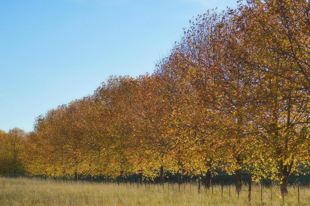 KwaZulu-Natal Autumn 7