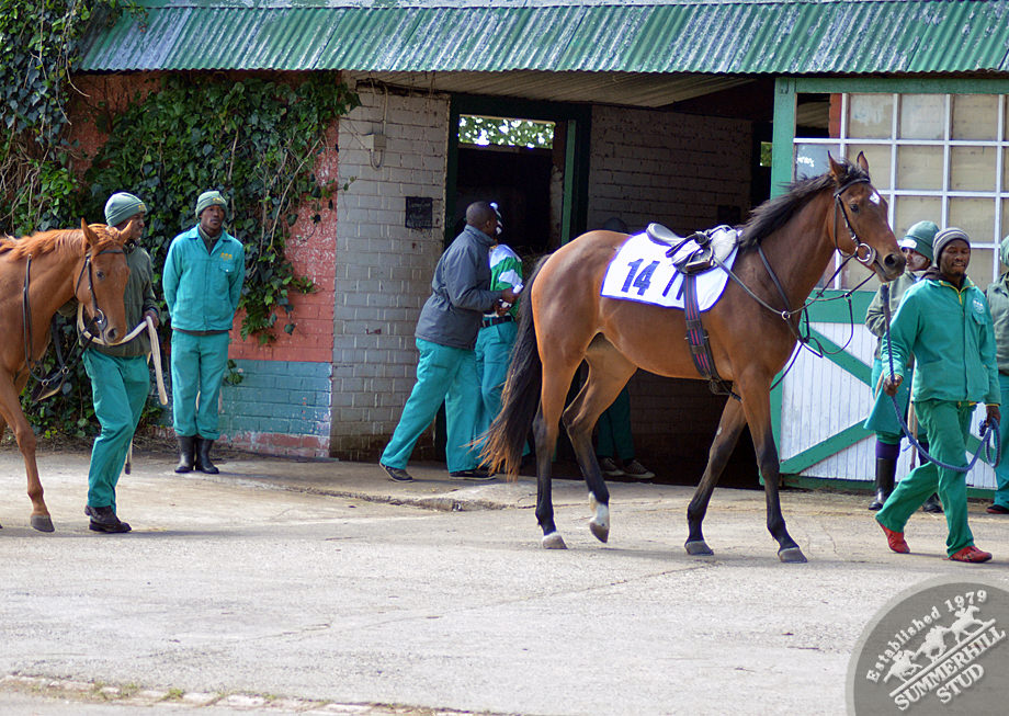CTS JHB Ready To Run Gallops 5