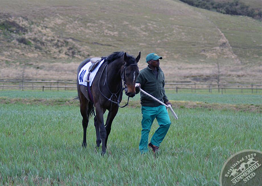 CTS JHB Ready To Run Gallops 38