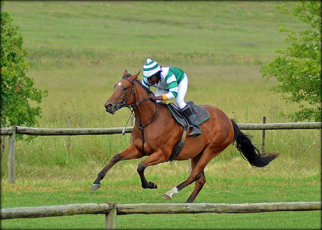 1-summer-gallops.jpg