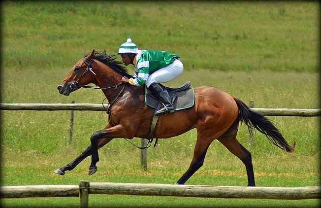 2-summer-gallops.jpg