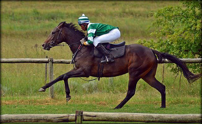 5-summer-gallops.jpg