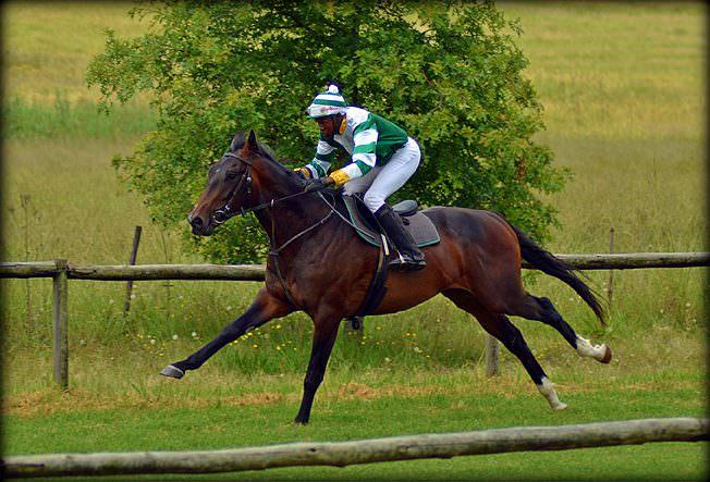 18-summer-gallops.jpg