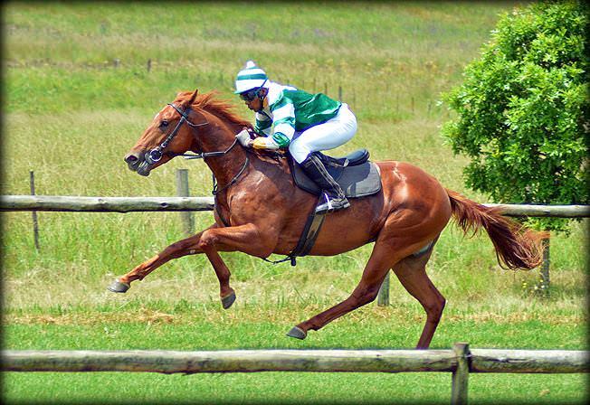 19-summer-gallops.jpg