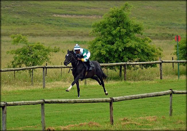 17-summer-gallops.jpg