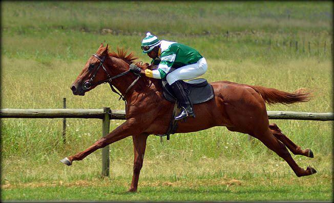22-summer-gallops.jpg
