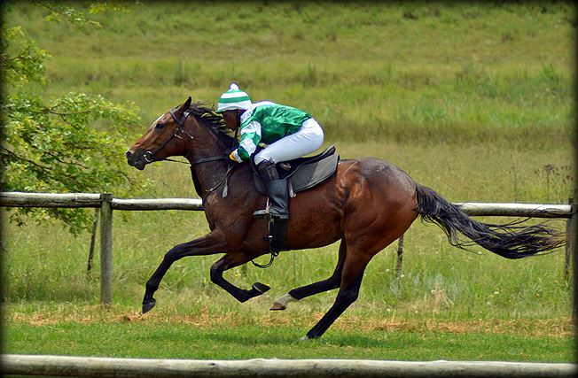 24-summer-gallops.jpg