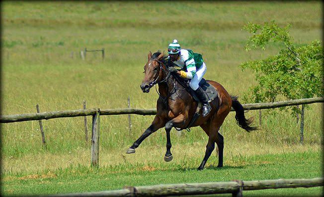 23-summer-gallops.jpg