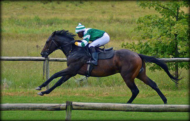 27-summer-gallops.jpg