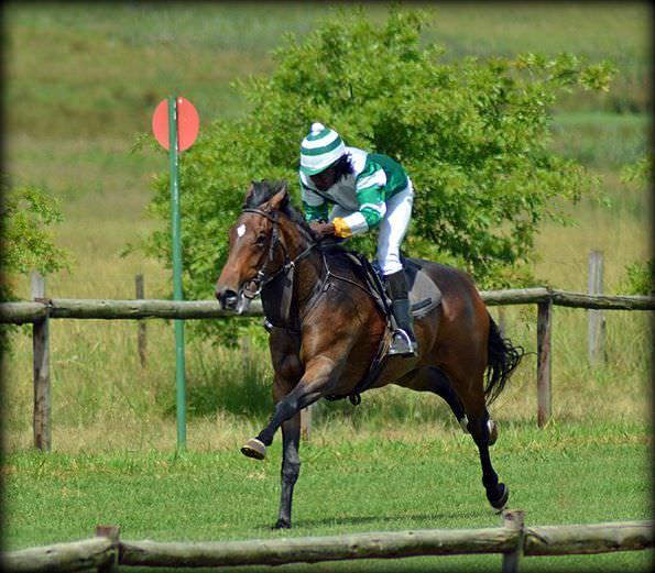 30-summer-gallops.jpg