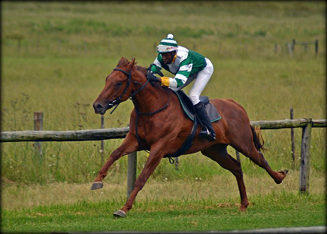 31-summer-gallops.jpg