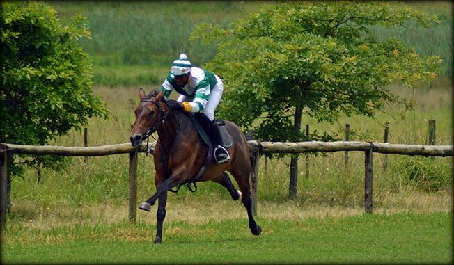 32-summer-gallops.jpg