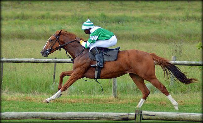 34-summer-gallops.jpg