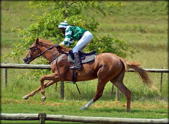 35-summer-gallops.jpg