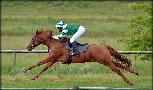 37-summer-gallops.jpg