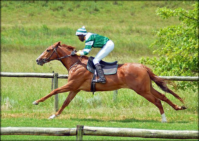 46-summer-gallops.jpg