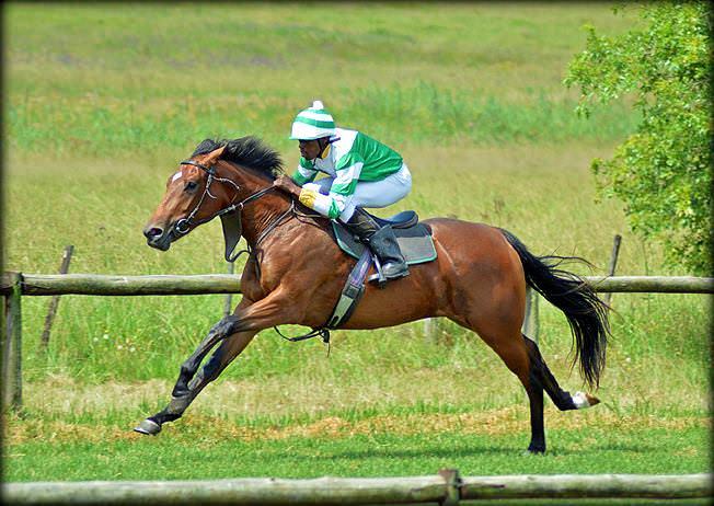 49-summer-gallops.jpg