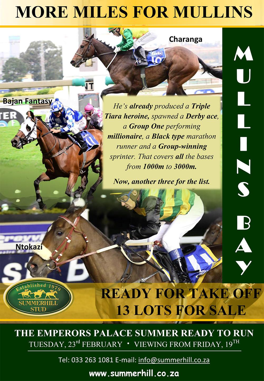 Mullins Bay - Summer Ready To Run Sale
