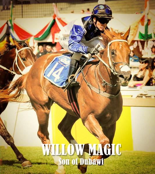 Willow Magic - Dubawi