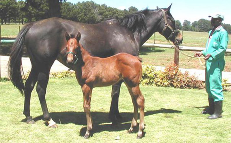 Hear The Drums as a foal / Robbie Byrne (p)
