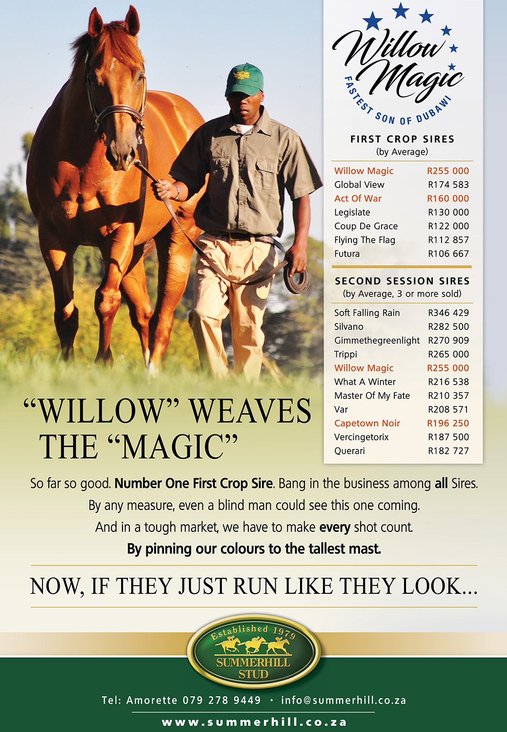 Willow Magic Stallion at the National Yearling Sale