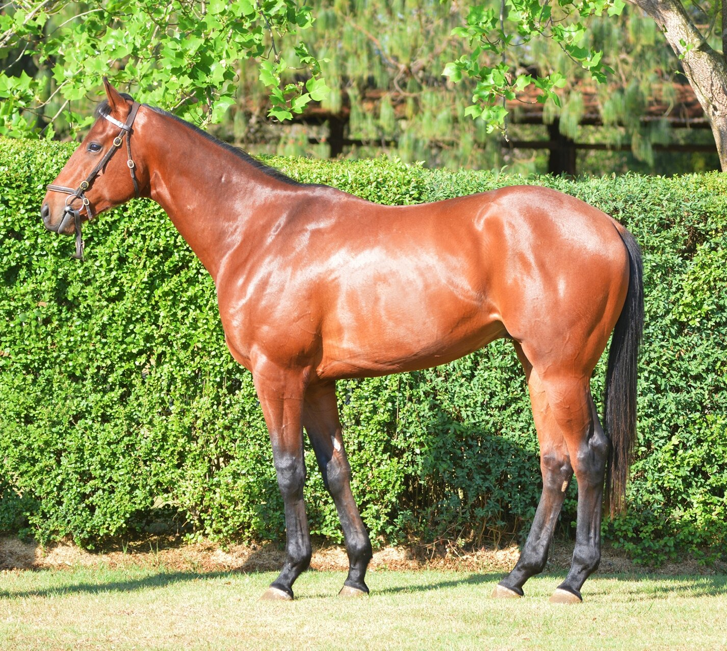 RTR 2019 Lot 28 The Kop (Visionaire x Dignify)