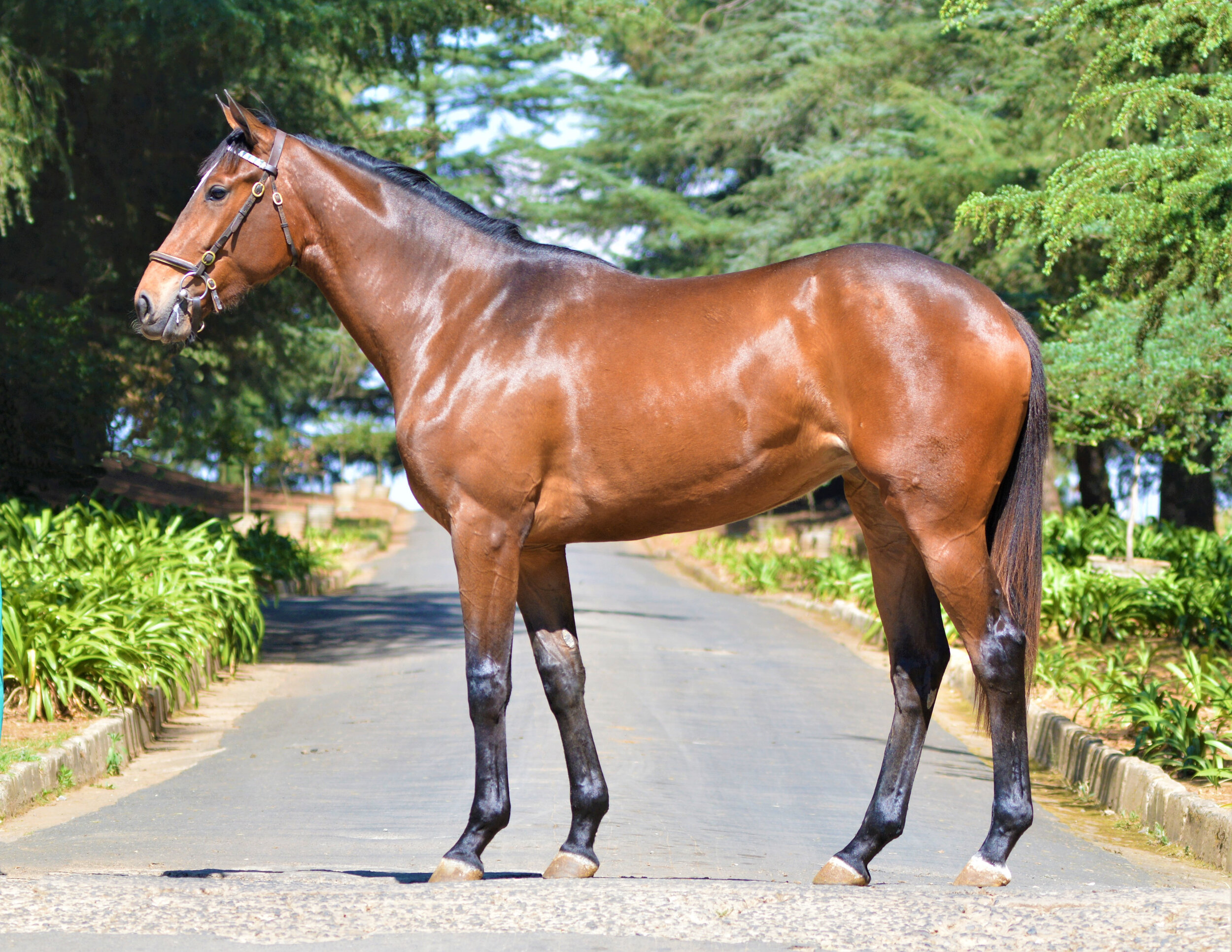 RTR 2019 Lot 84 Mauby (Act Of War x Marry Me Mullins)