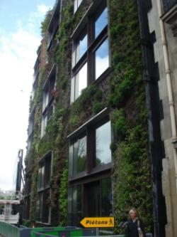 Quai Branley, Paris green wall photograph courtesy of Zoë Cooper