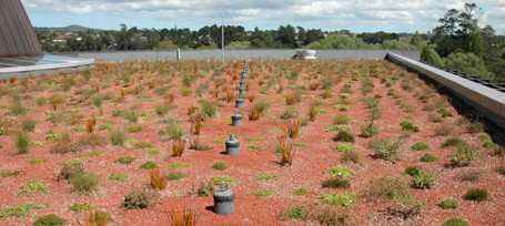22 Waitakere Council green roof, Auckland, photograph courtesy of Robyn Simcock.jpg