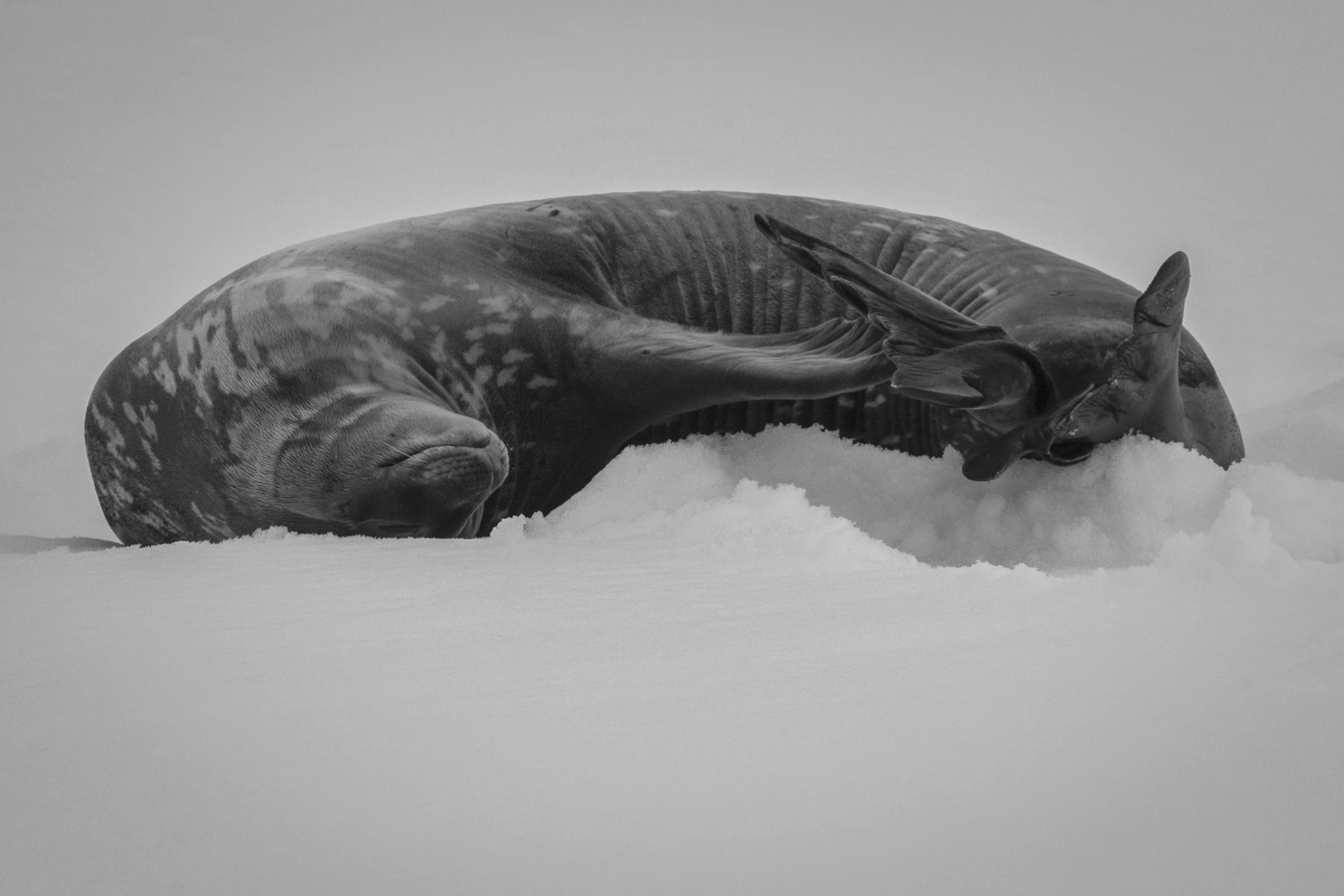 Antarctica-3785.jpg