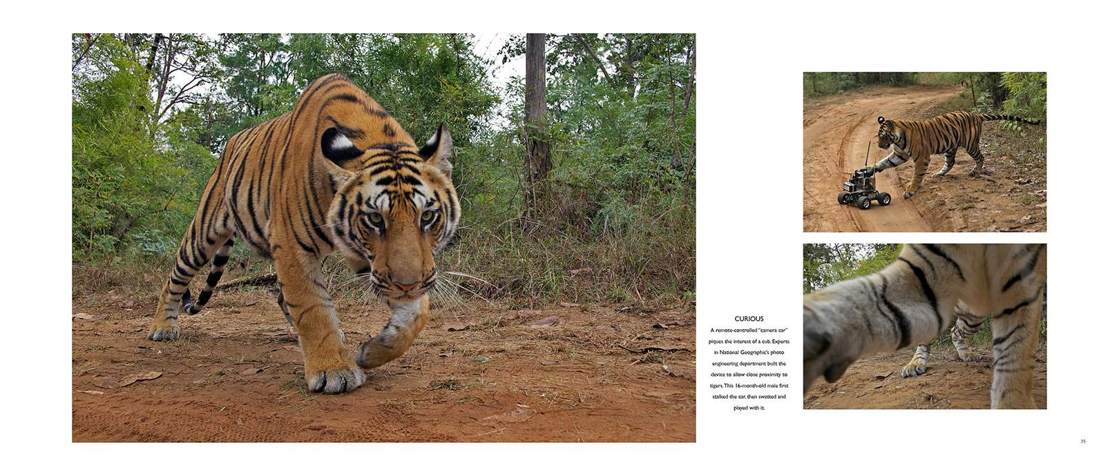 TGR_Tiger cam.jpg
