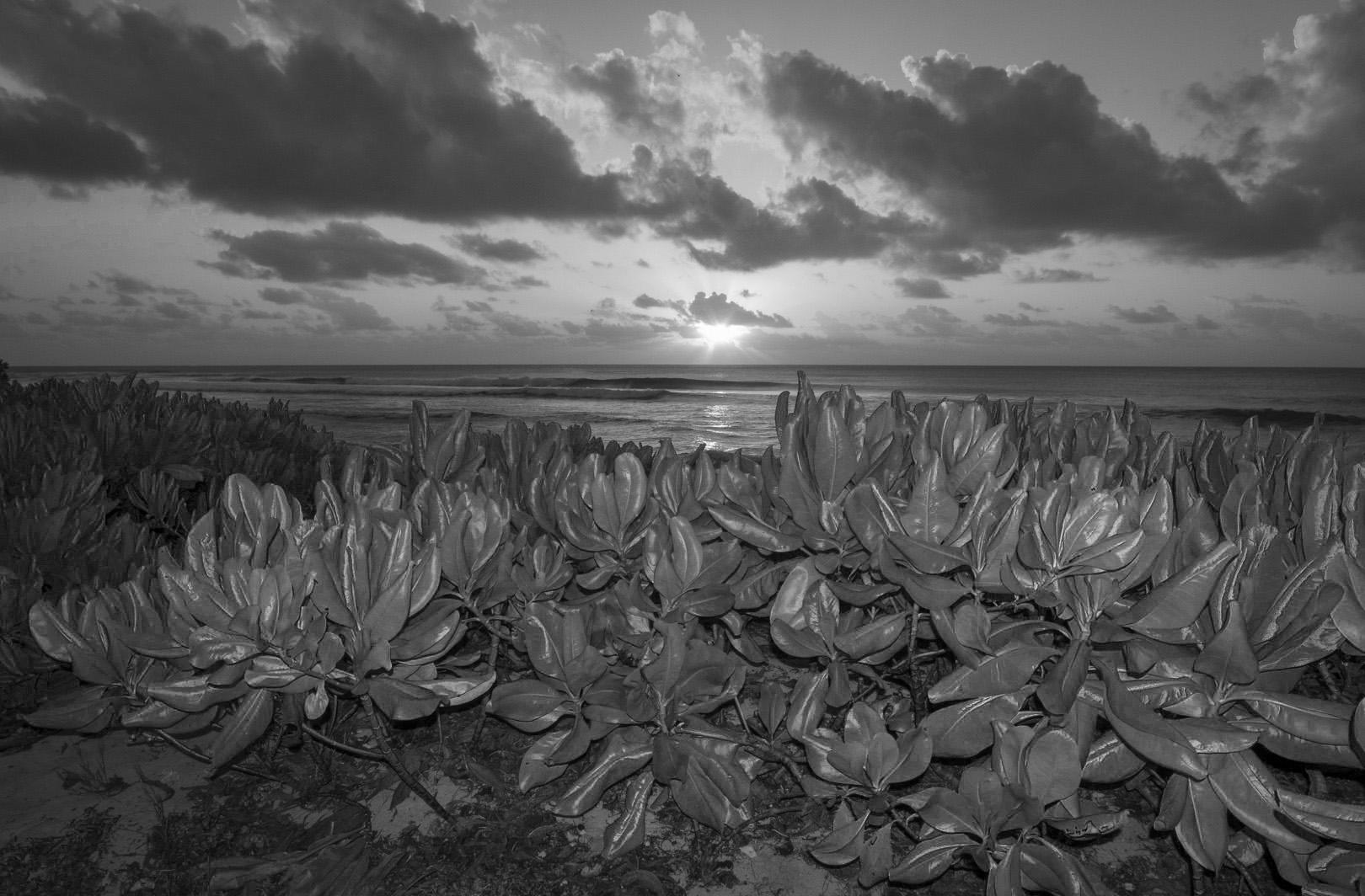 Seychelles_28 (1).jpg