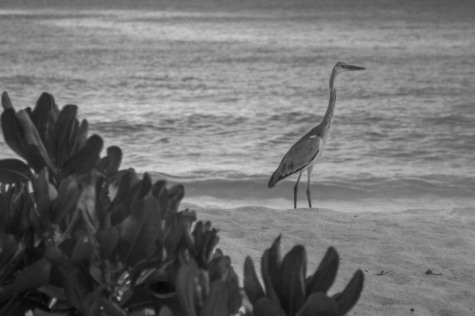Seychelles_45.jpg