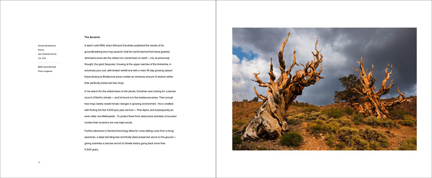 Trees_-9.jpg