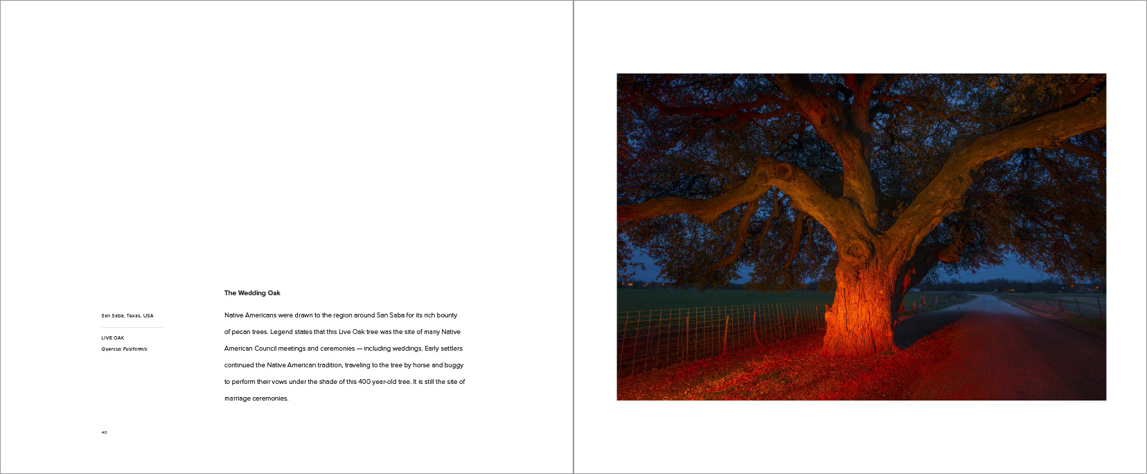 Trees_-23.jpg