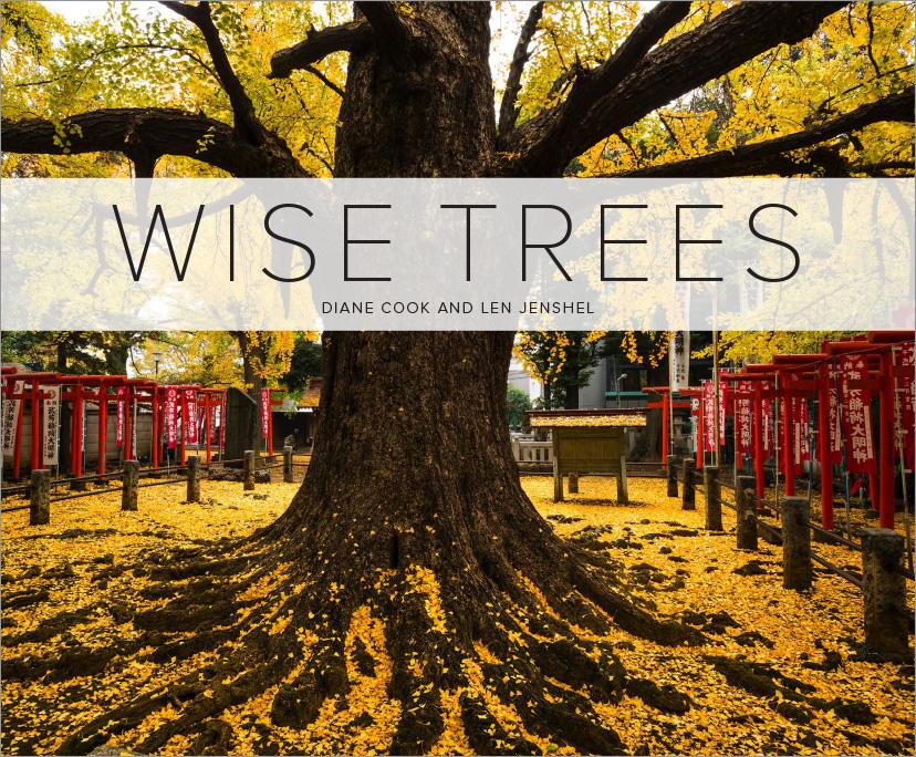 Trees_Covers-2.jpg