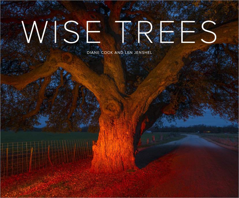 Trees_Covers-5.jpg