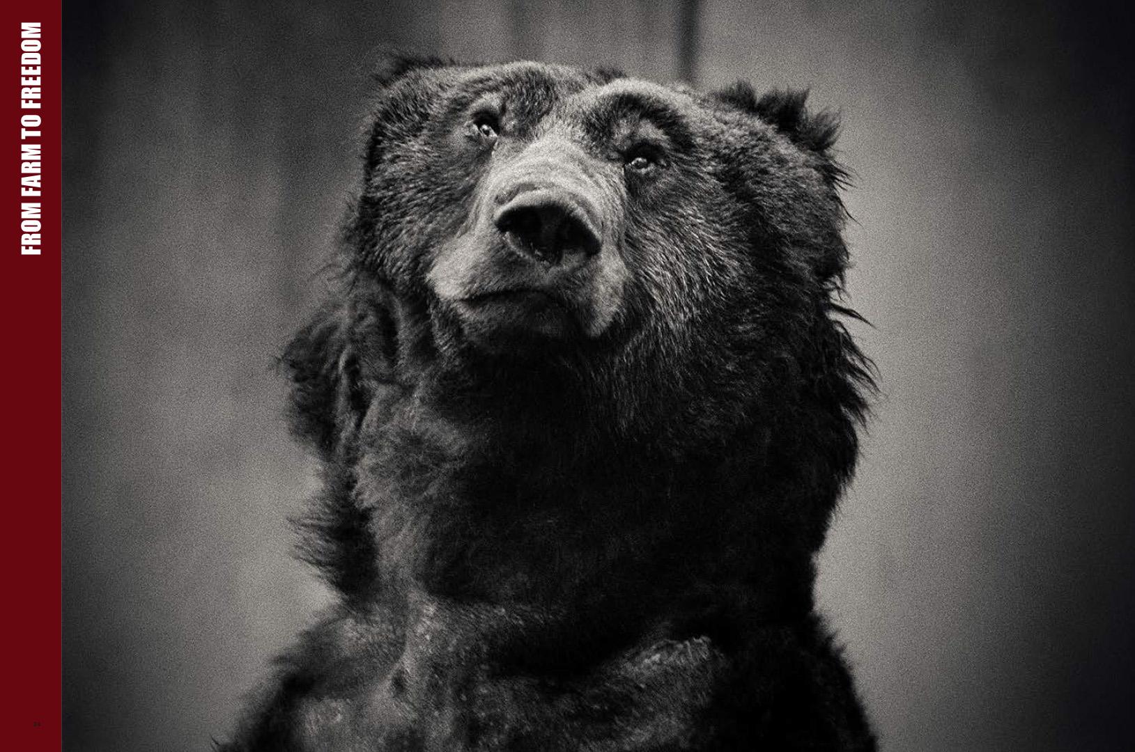 WC_Bear.jpg