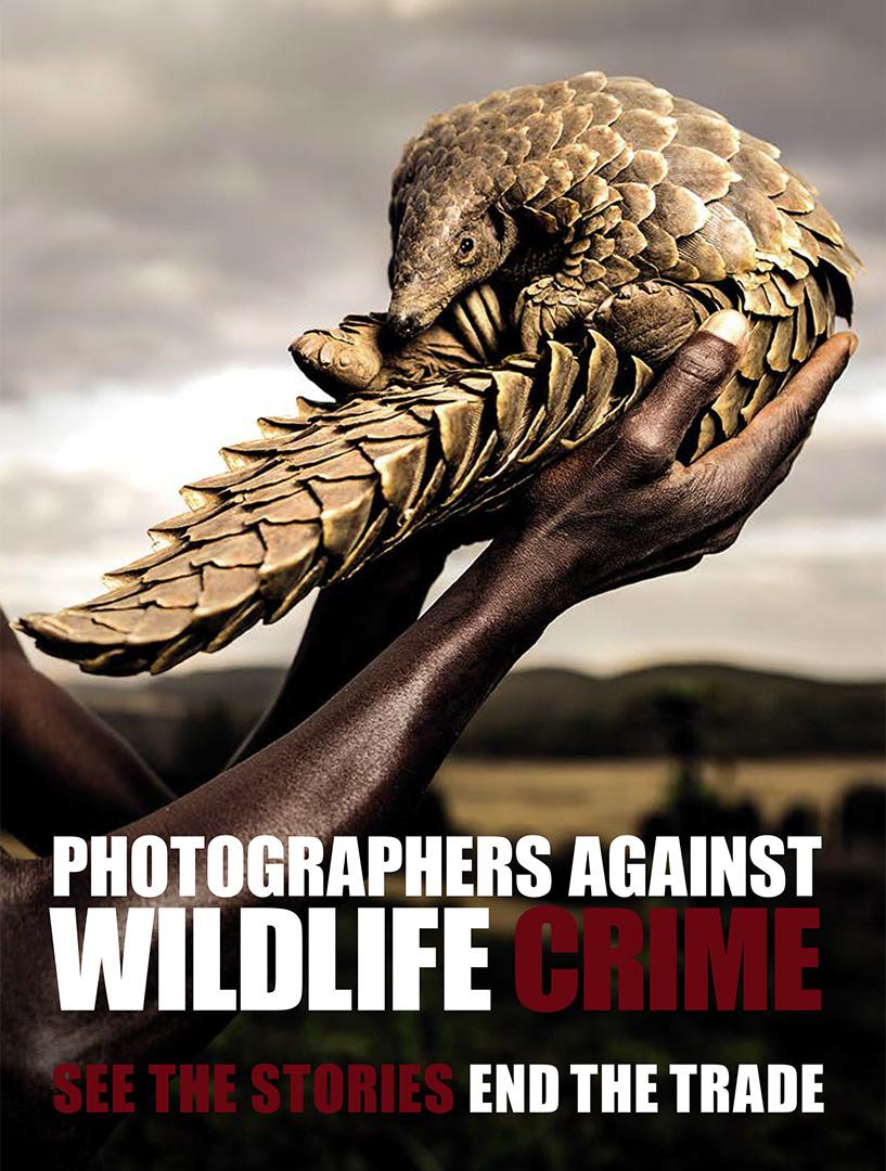 Wildlife Crime_Cover.jpg