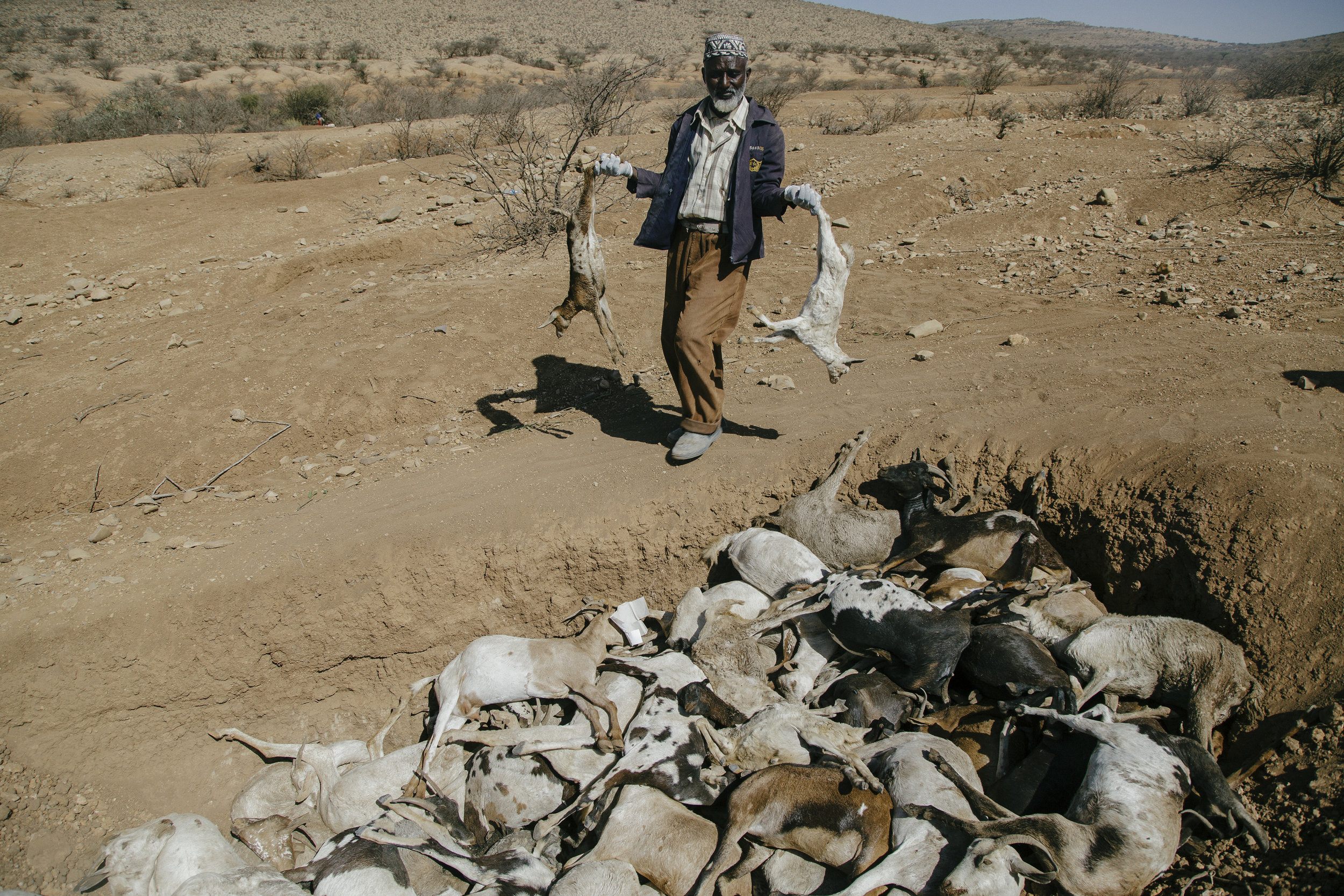 A man carries dead livestock to be burned in western Somaliland. The people had traveled hundreds of kilometers in search for water and grass for they animals. Here, near the village of Qulujeed, they had to stop and wait for emergency aid from the Red Crescent and other NGOs. The few animals still alive started to die.
