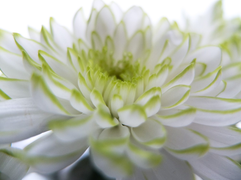 miko-coffey-flowers-3.jpg