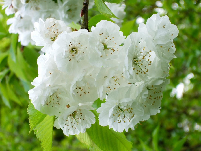 miko-coffey-flowers-17.jpg