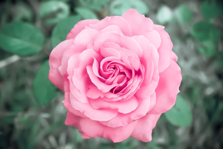 miko-coffey-flowers-23.jpg