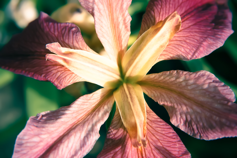 miko-coffey-flowers-27.jpg