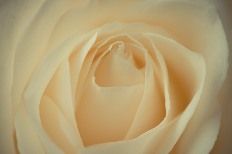 miko-coffey-flowers-6.jpg