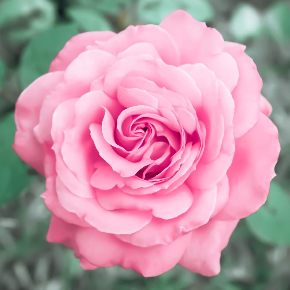 Flower by Miko Coffey