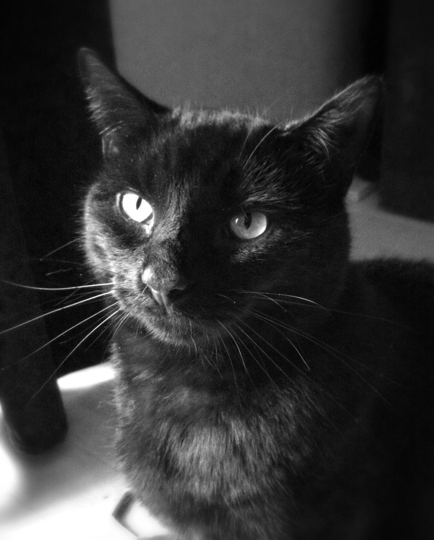 My cat Kuma