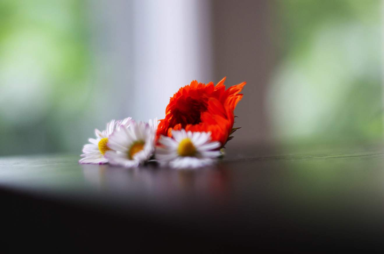 Gänseblümchen und Ringelblume
